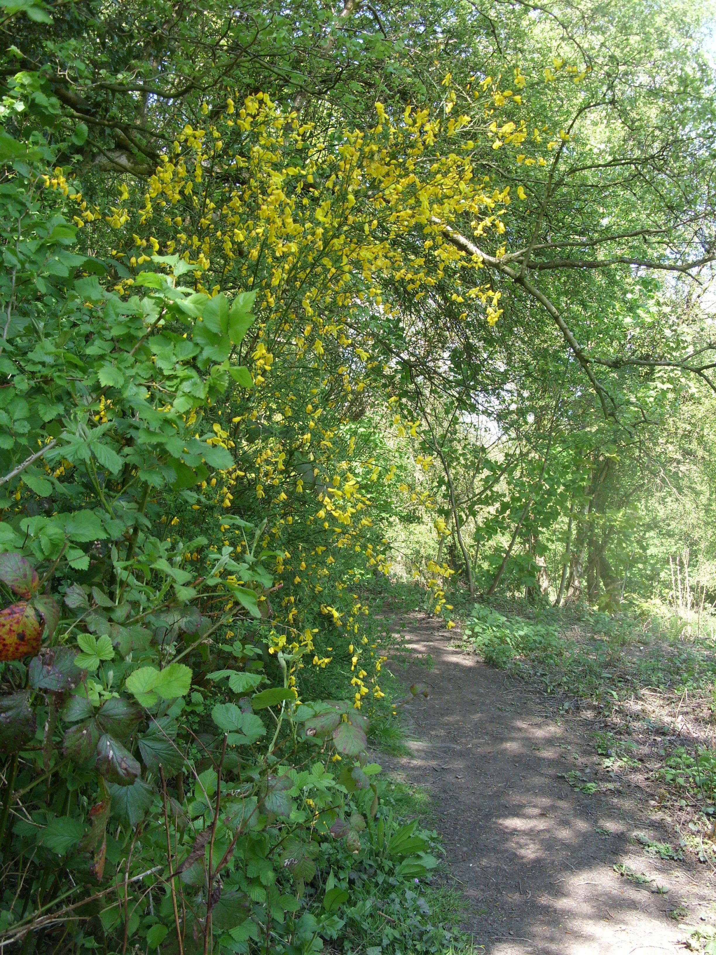 Lower Path